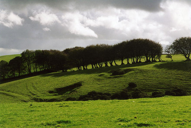 St Clether: line of trees