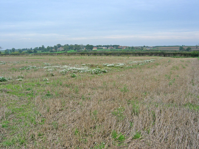 Farmland near Saltby