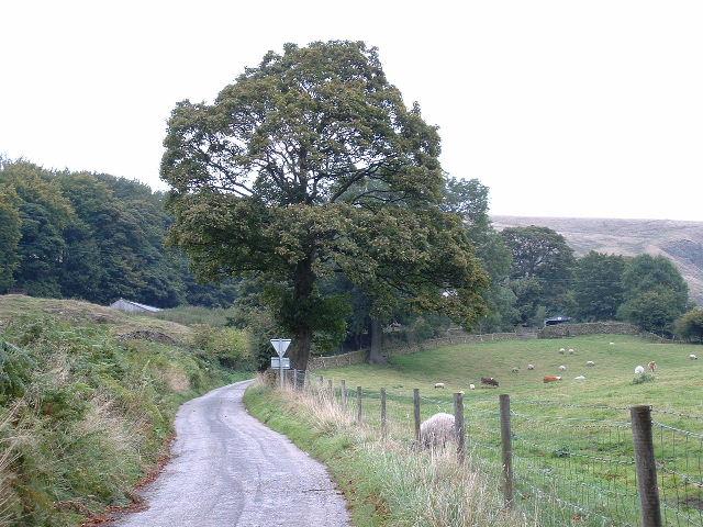 Rowlee Farm Track