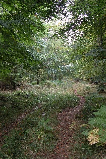 Bridleway in Guiting Wood
