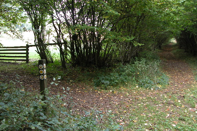 The Wardens Way in Guiting Wood