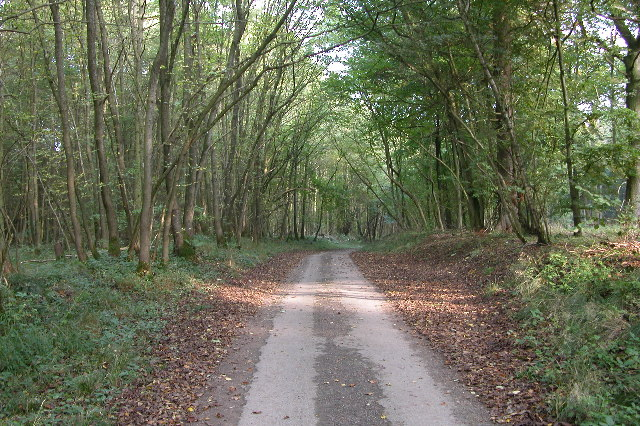 Country lane in Guiting Wood