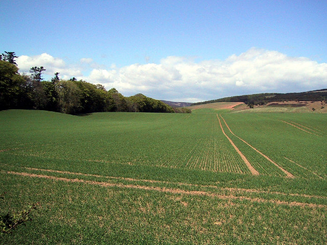 Field on B966 Looking NW