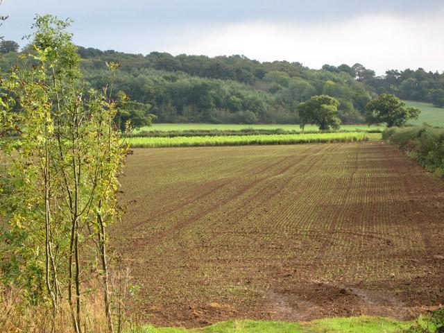 Farmland near Harston, Leicestershire