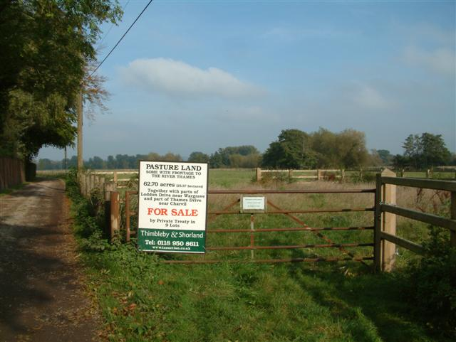 Pasture on Thames Drive