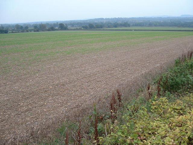 A4 Fields