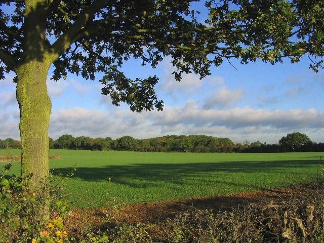 Bluntswall Woods near Billericay, Essex