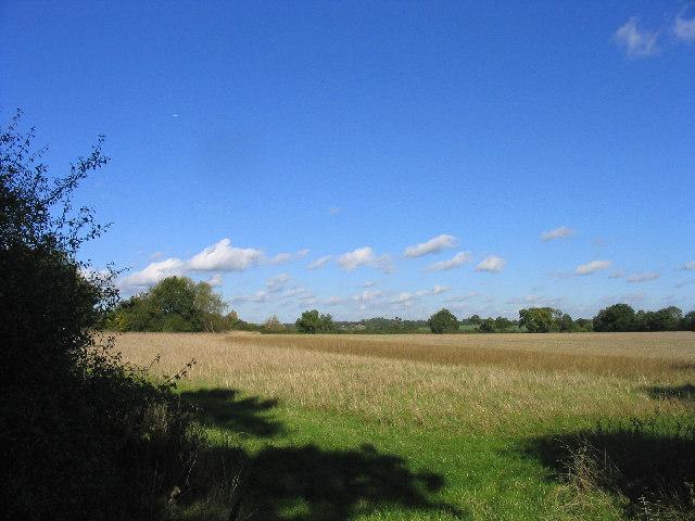 Fallow land, Heard's Farm, Brentwood