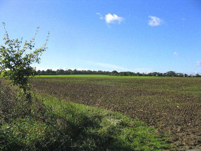Farmland on the Blackmore-Writtle road