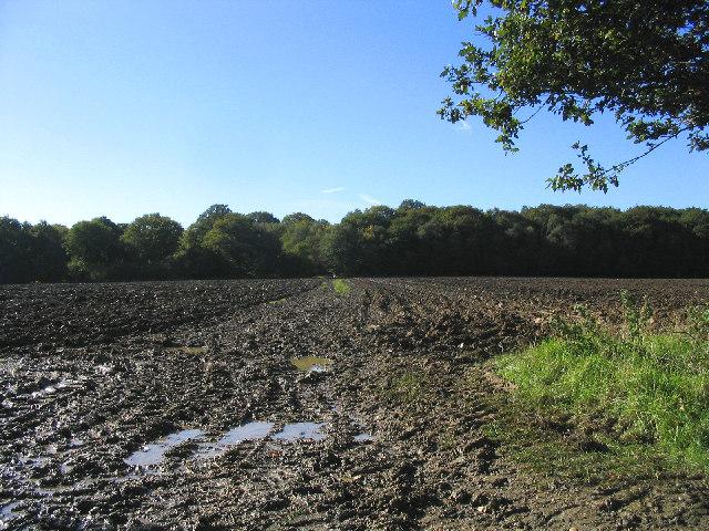 Bridleway near Mill Green, Essex