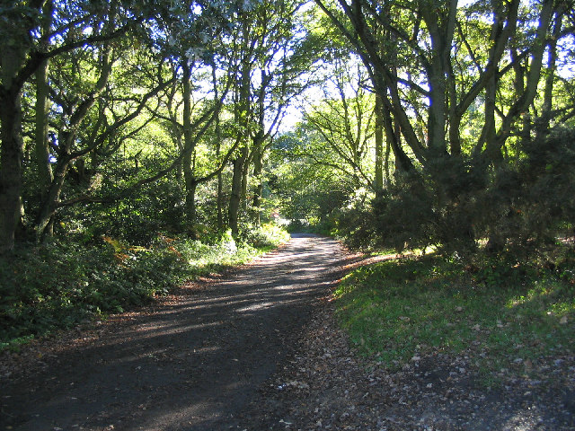 Stoneymore Woods, Mill Green, Essex