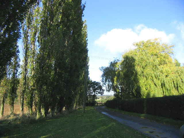 Driveway to Crondon Hall, Margaretting Tye, Essex