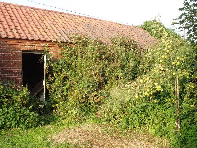 Overgrown derelict barn