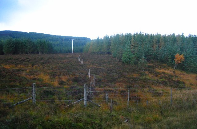 Forestry near Dalwhinnie