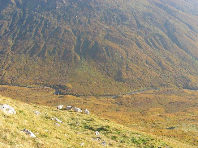 Sheep on Meall an Tagraidh