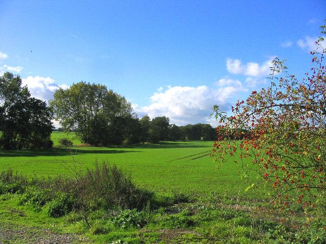 Rural scene - Brentwood