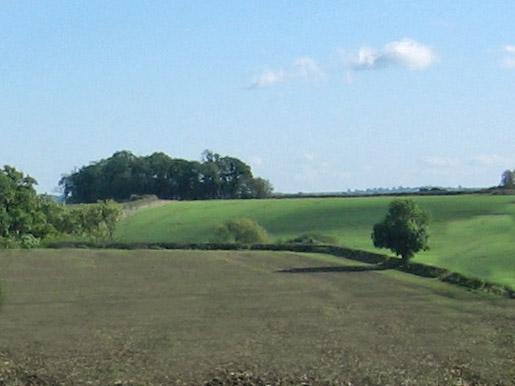 Cumberland Spinney
