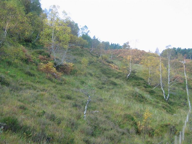 Woodland, Glen Elchaig