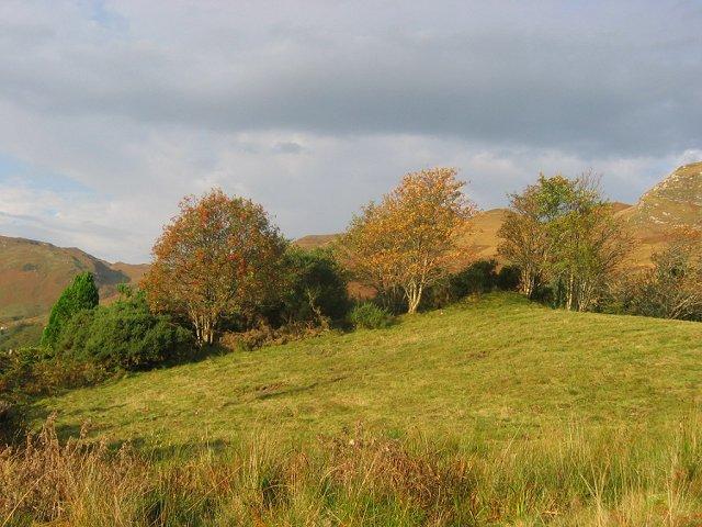 Field, Sallachy