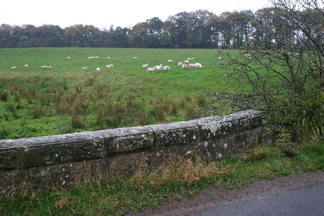 Bridge, sheep, field