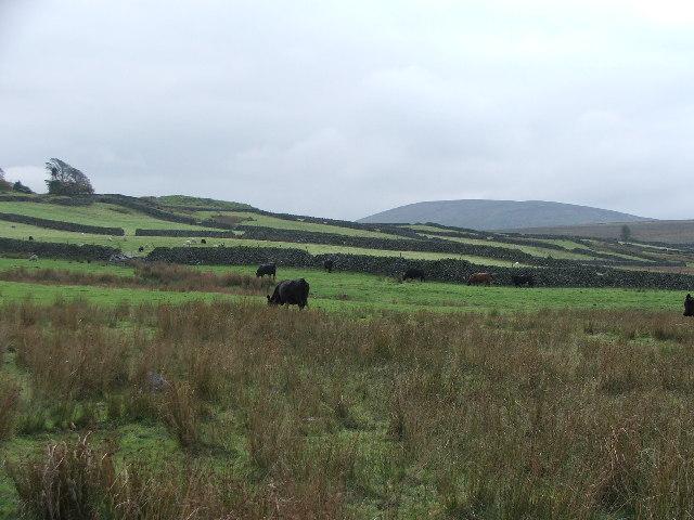 Farmland between Birkerthwaite and High Ground