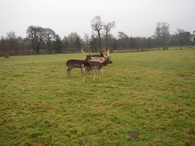 Deer in Normanby Hall