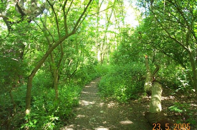 Cheyne Walk woodland, Grange Park