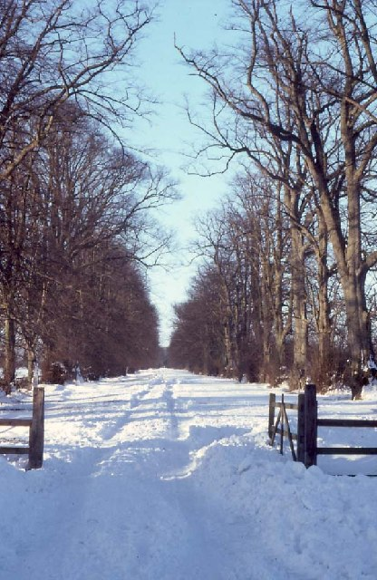 The avenue of Castletown House, Celbridge.