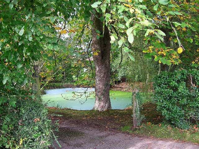 Pond, near Lloyts Farm