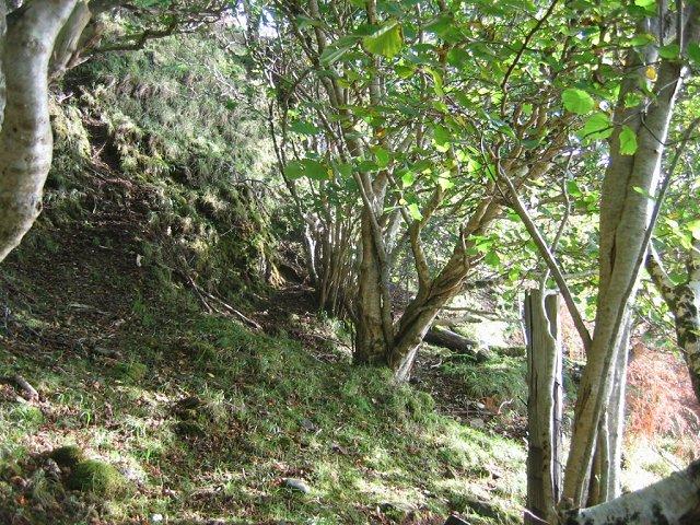 Hazel woods, Camastianavaig.