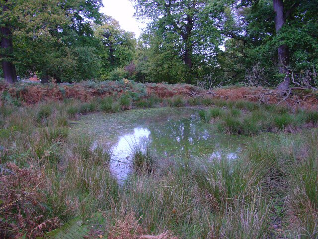 Woodland Pond, Knole Park, Kent