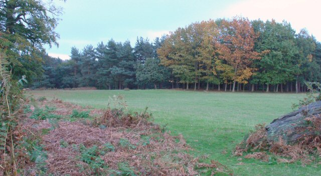 Grassy Clearing in Knole Park, Kent