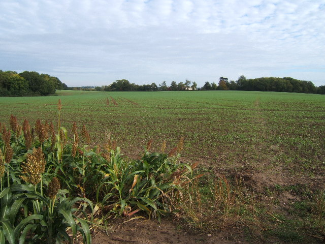 Field between Chasemore Farm and Bookham Lodge