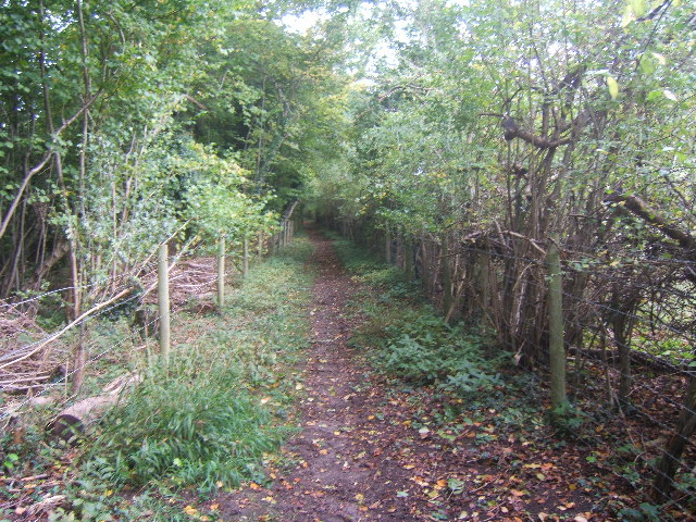 Bridleway leading to Rowbarns Manor