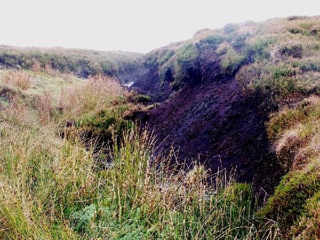 Punchard Moor