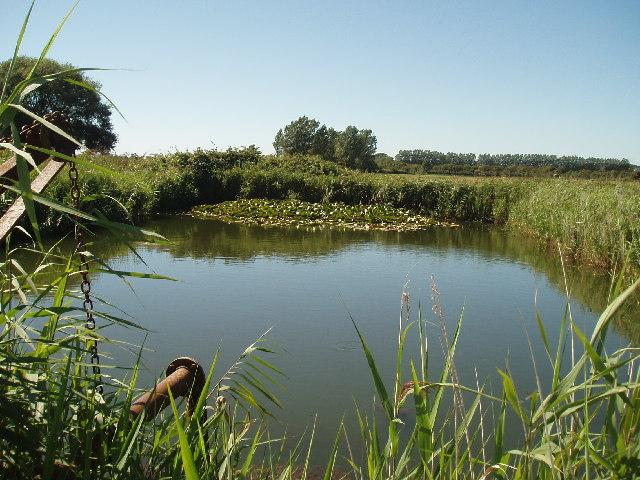 Irrigation Pond Angmering