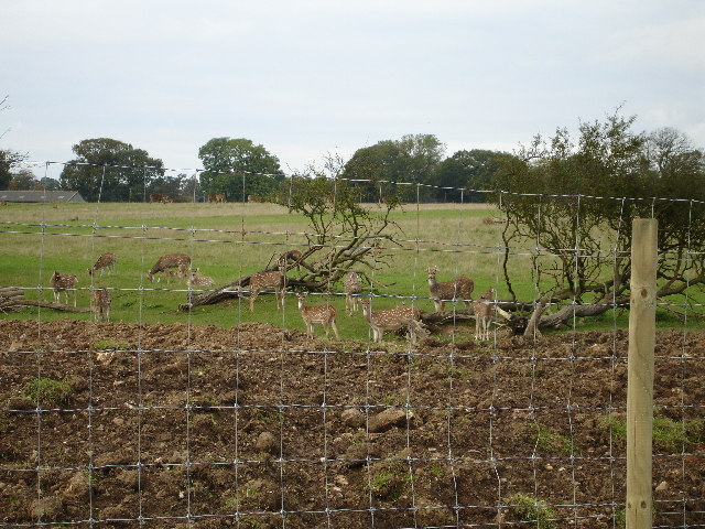 Deer at Whipsnade zoo.