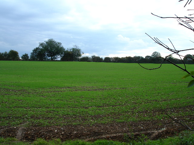 View over fields towards Studham