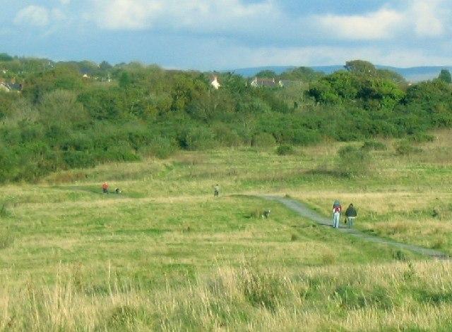 Grassland Path at Mynydd Mawr Woodland Park