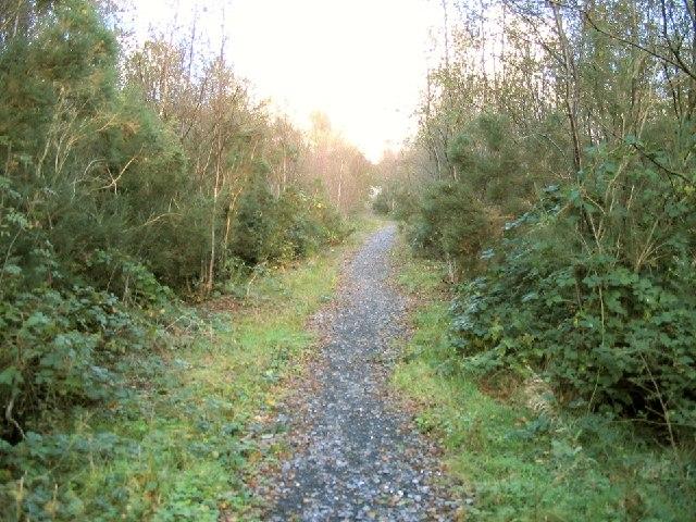 Forest path in Mynydd Mawr Woodland Park