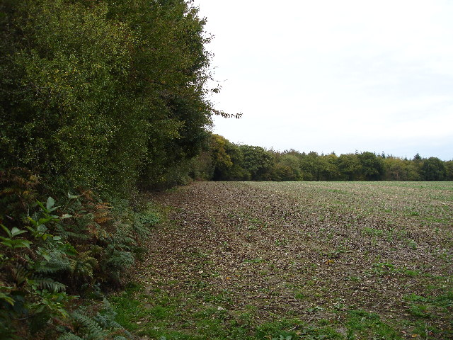 Dedmansey Wood