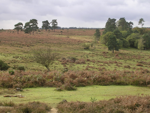 Heathland to the west of Cadman's Pool, New Forest