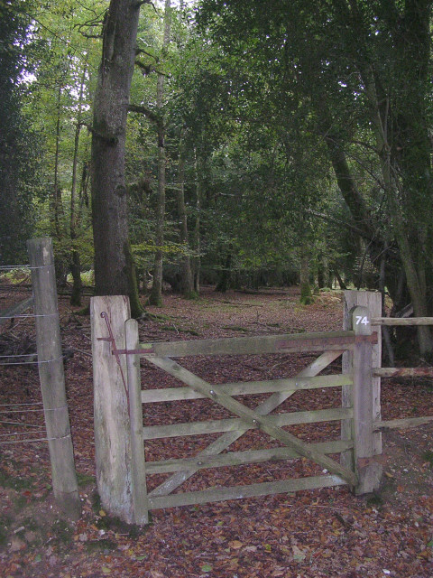 An entrance to the South Bentley Inclosure, New Forest