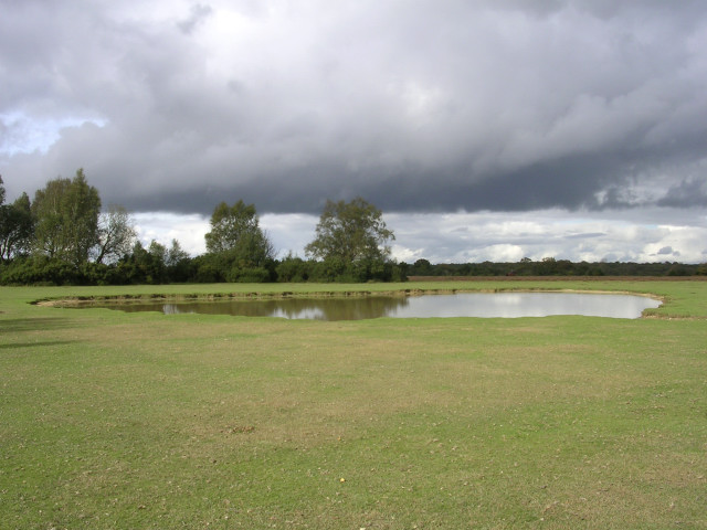 Green Pond, Fritham Plain, New Forest