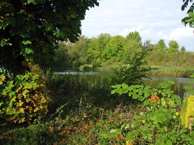 Fishing Lake, Stoke Rochford Estate