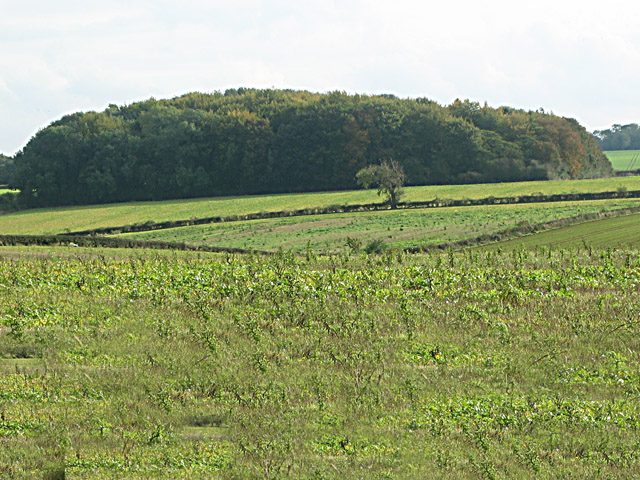 Farmland near Stoke Rochford