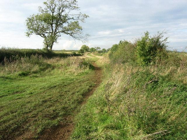 Sewstern Drift, near Skillington