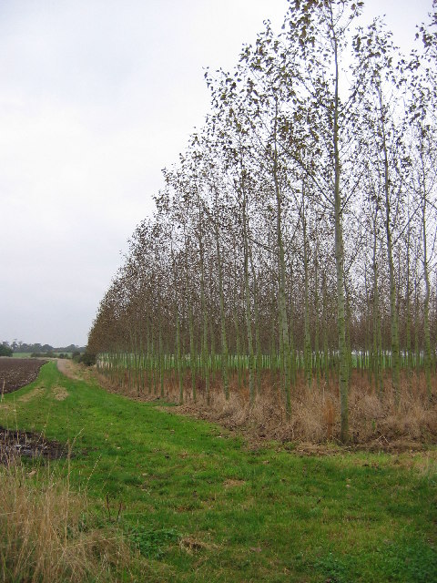 Regimental Trees