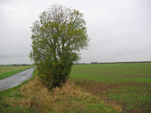 Farmland near Little Hatfield
