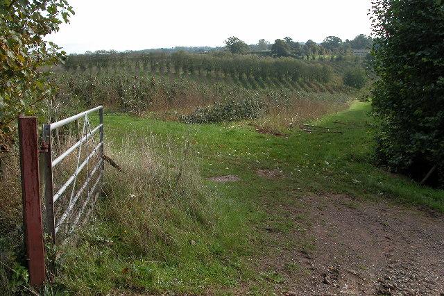 Orchards near Hill View Farm, Castle Tump
